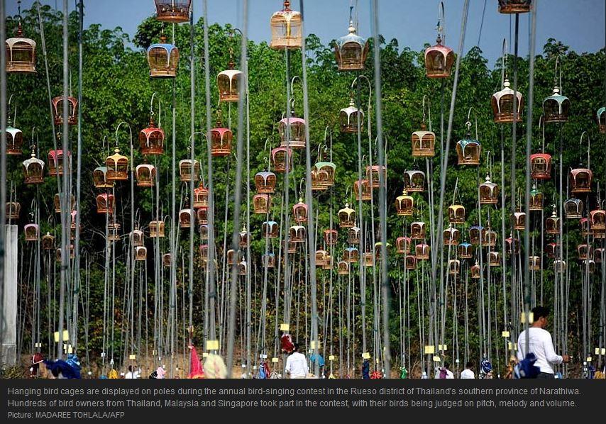 Semiotics Of The Birdcage Culture Decanted