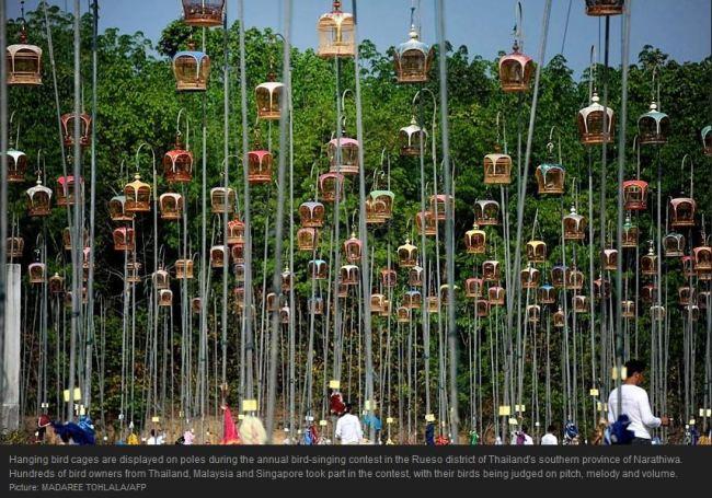 Bird Singing Thailand