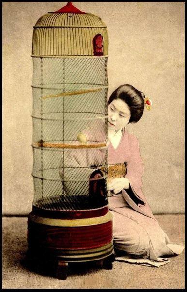 Giesha Birdcage Japan